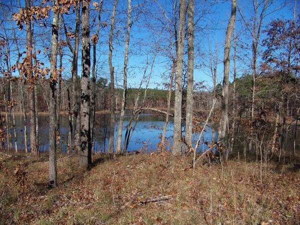 hunting land in alabama for sale